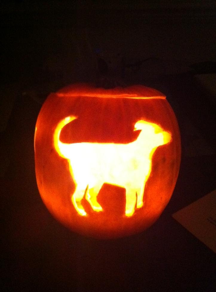 pumpkin dog design