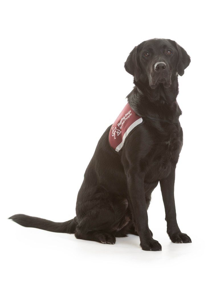 Hearing Dogs Shoot 48