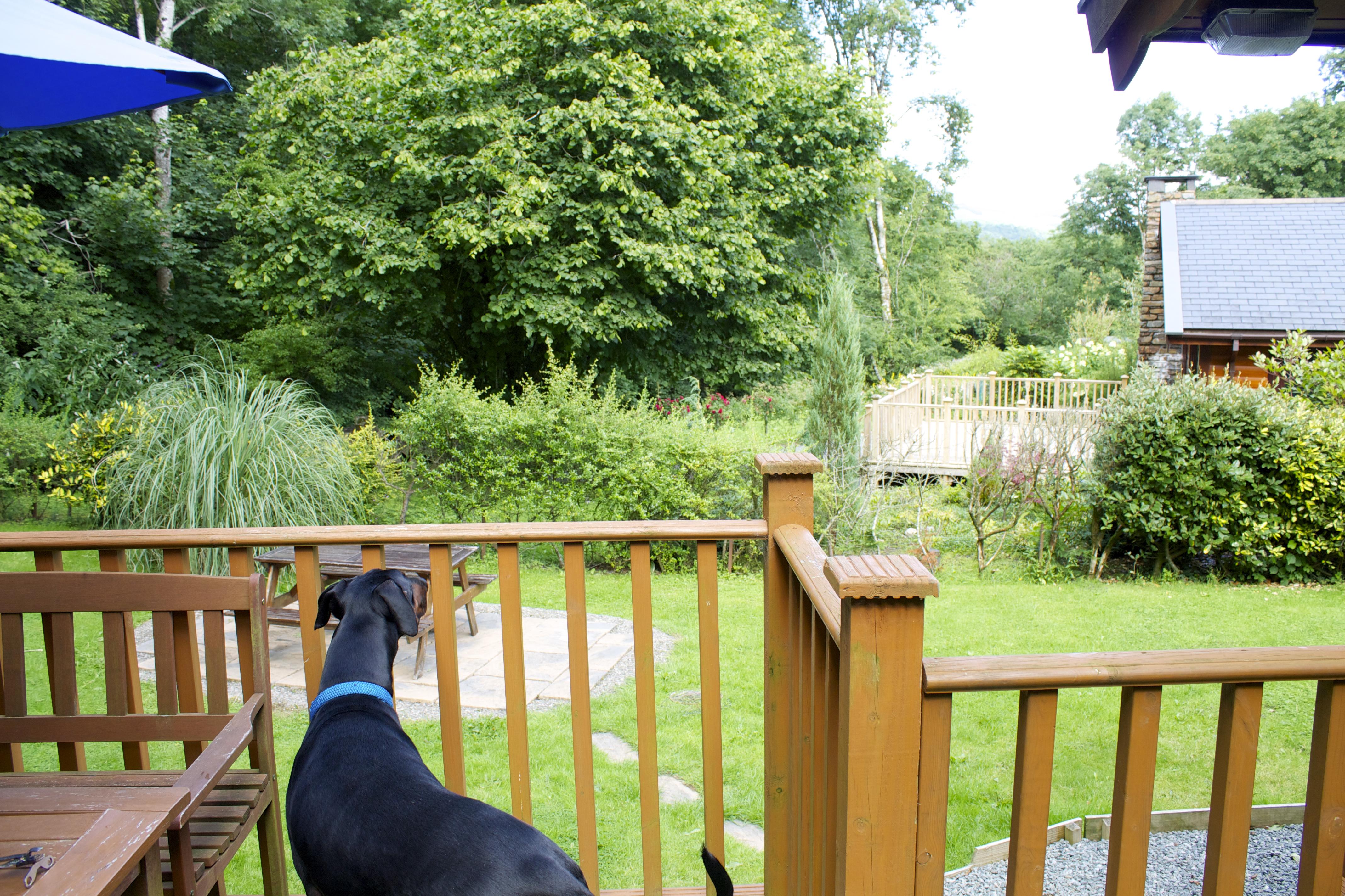 How To Pet Proof Your Garden Velcro Dog