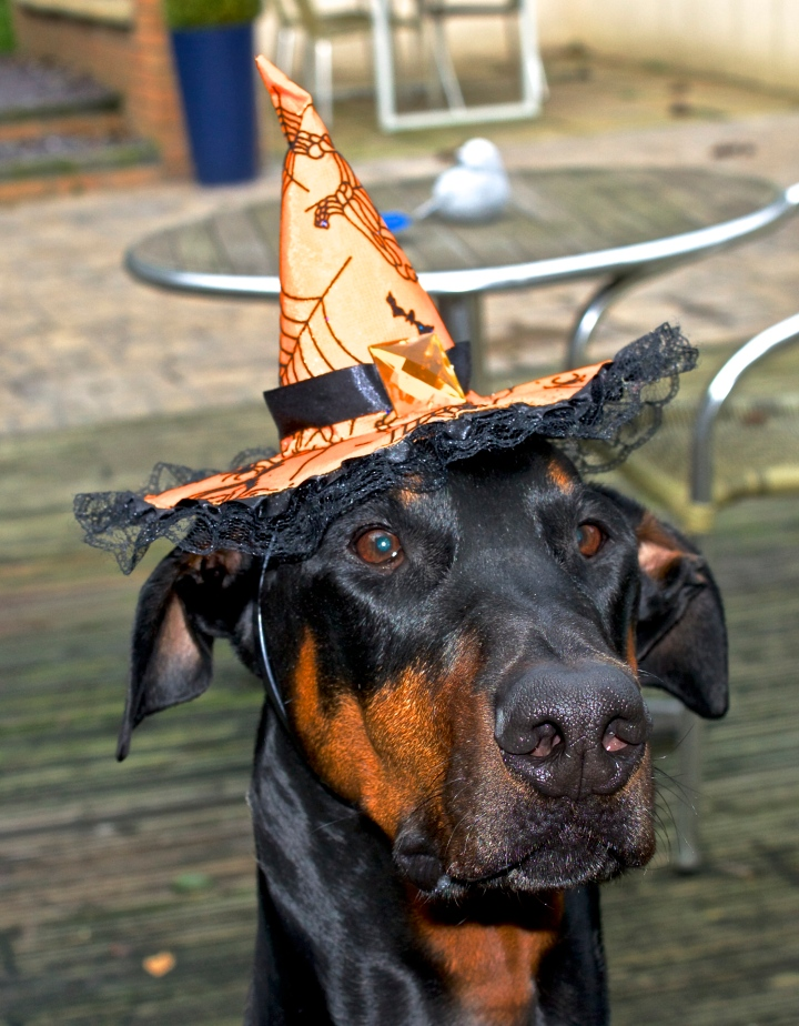 dog halloween witches hat