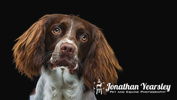 jonathan-yearsley-pet-photographer-cheshire-1