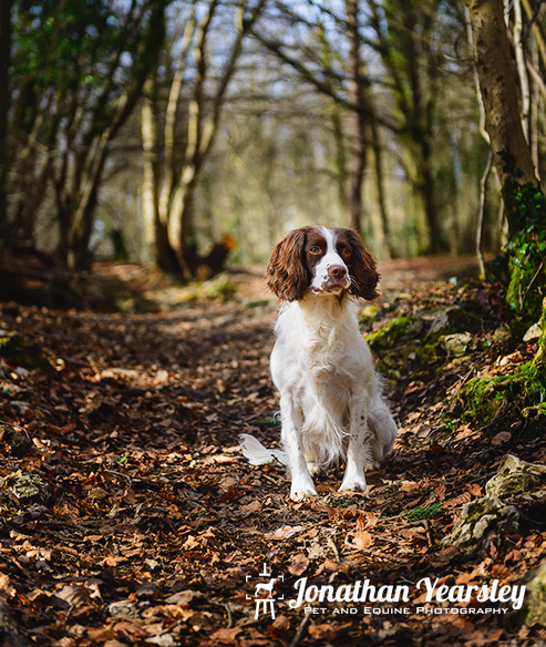 jonathan-yearsley-pet-photographer-cheshire-10