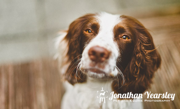 jonathan-yearsley-pet-photographer-cheshire-11