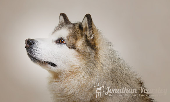 jonathan-yearsley-pet-photographer-cheshire-2