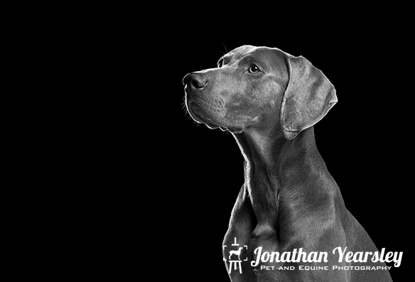 jonathan-yearsley-pet-photographer-cheshire-3