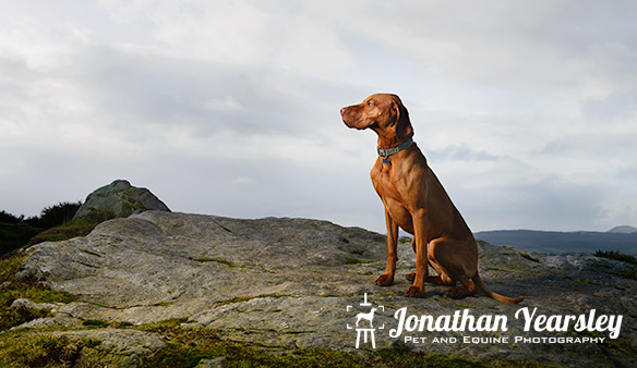 jonathan-yearsley-pet-photographer-cheshire-4