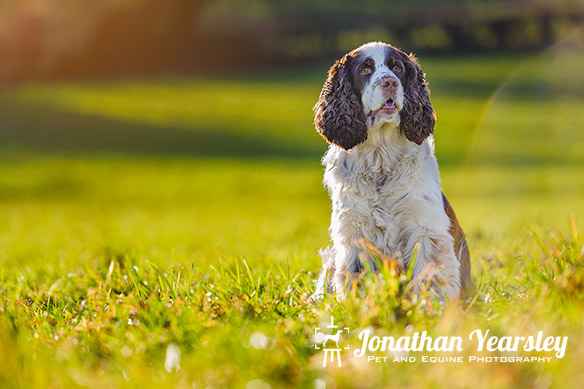jonathan-yearsley-pet-photographer-cheshire-5