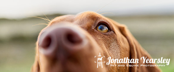 jonathan-yearsley-pet-photographer-cheshire-6