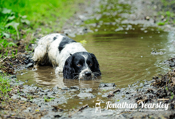 jonathan-yearsley-pet-photographer-cheshire-7