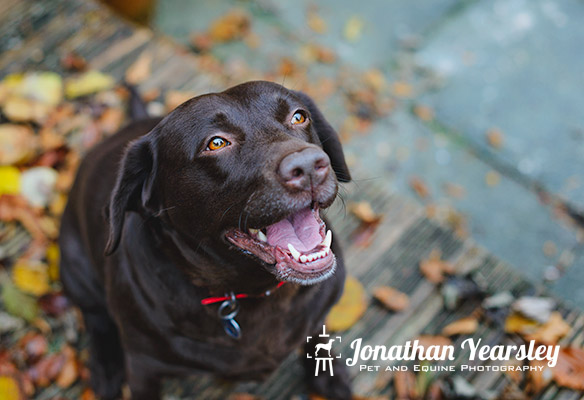 jonathan-yearsley-pet-photographer-cheshire-8