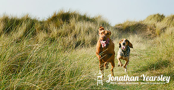jonathan-yearsley-pet-photographer-cheshire-9