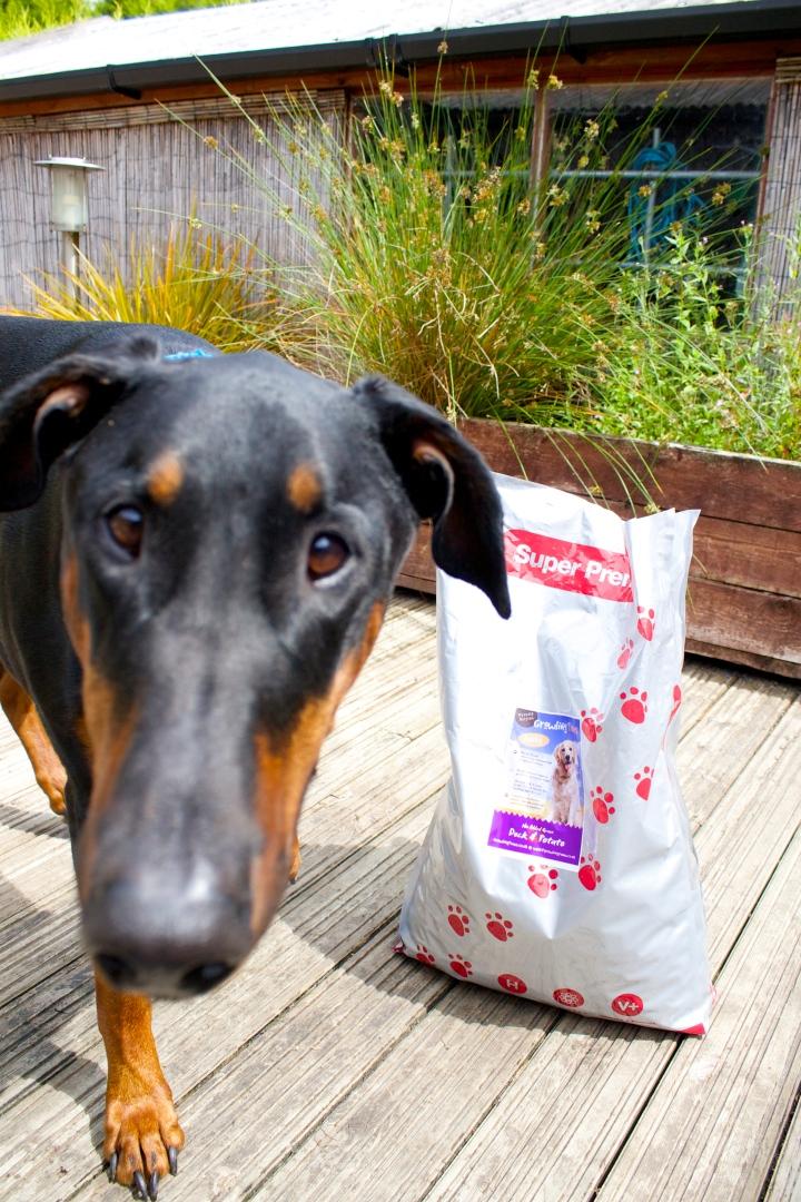velcrodog with dog food bag