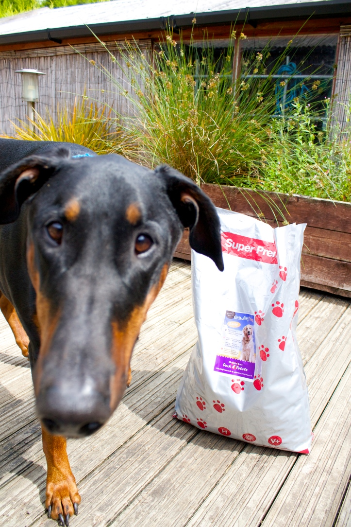 velcrodog with dog food bag