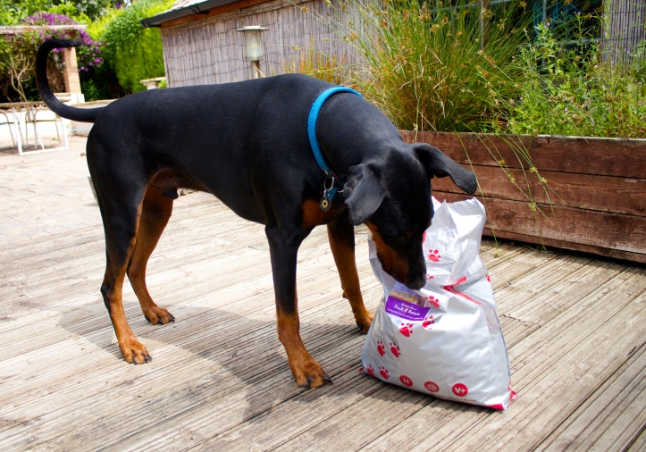 dobermann dog food bag