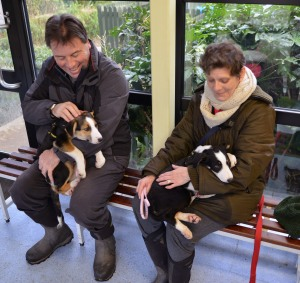 14 week old collie puppies Mel and Sue from the Dogs Trust Harefield