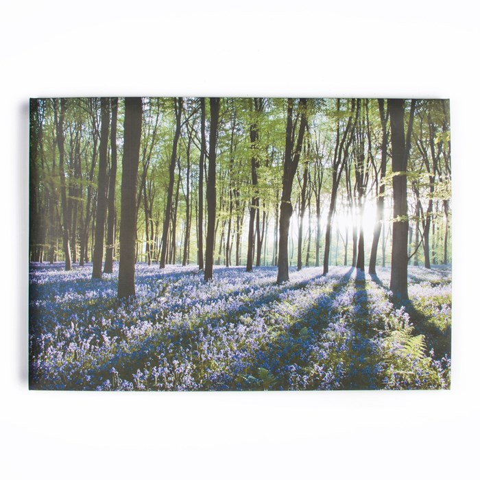 40-247-BLUEBELL-LANDSCAPE-PRODUCT-SHOT-WEB